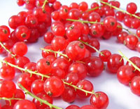 currant