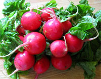 radish