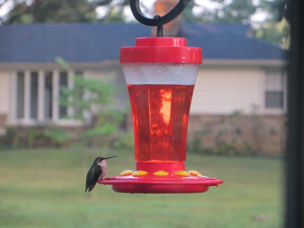Food Recipes Hummingbird Food Recipes