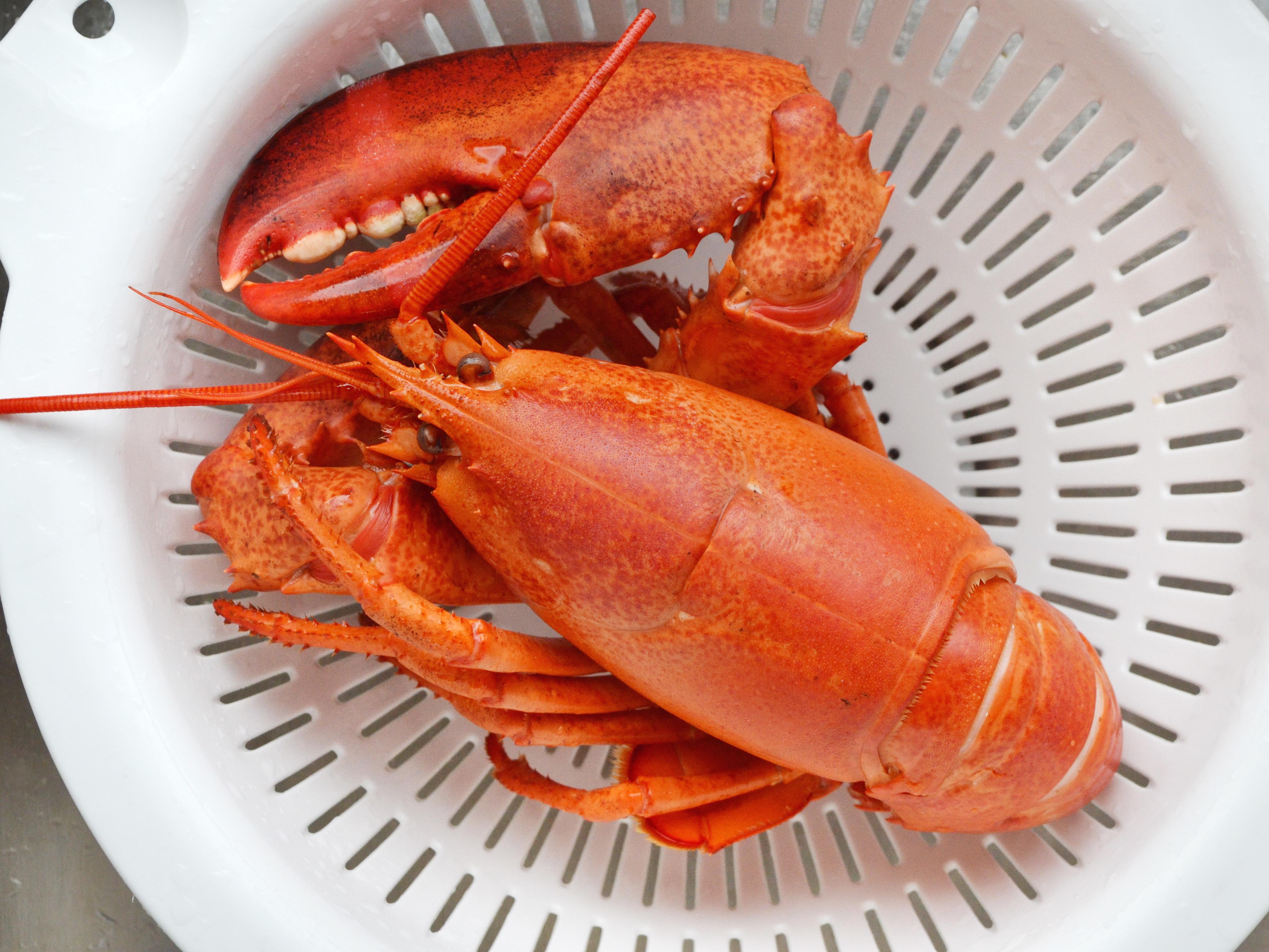 fancy lobster presentation - HD4096×3072